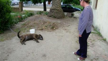 Denuncian matanza de perros en Laguna Seca