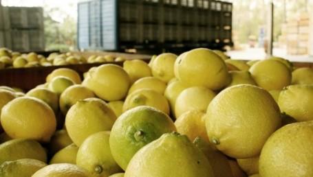 EEUU evaluará un pedido de Argentina para la importación de limones